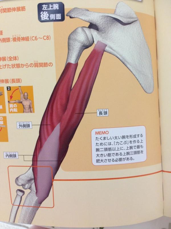 の が 腕 痛い 筋 棘下筋(きょくかきん)…肩の痛みの80~90%を占めるのは…!
