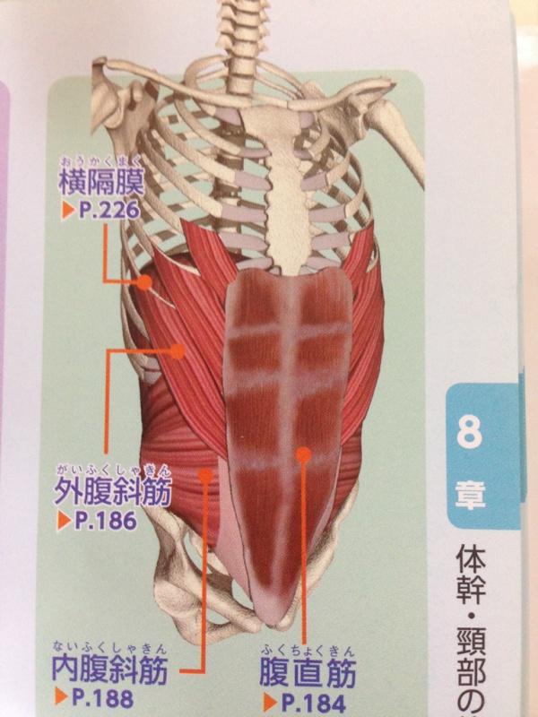 横腹 筋肉 痛